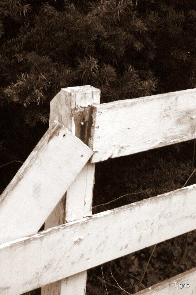 Broken Fences by Tigris