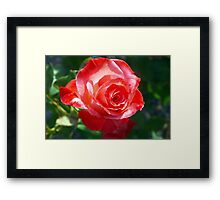 Undeniable red Framed Print