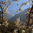 View of the Kusum Kangru (Three Snow-White Gods) 6367 from Benkar by MichaelBr