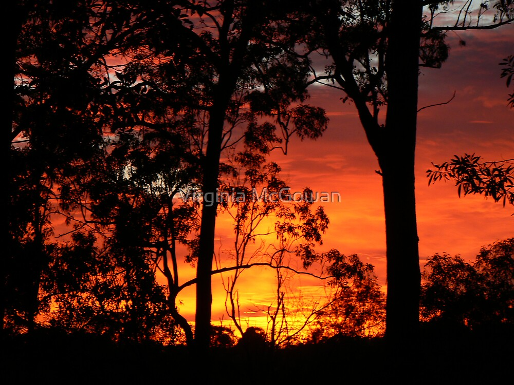 Sunrise this Morning 4.15am  Nerang Qld. by Virginia McGowan