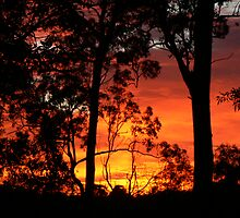 Sunrise this Morning 4.15am  Nerang Qld. by Virginia McGowan