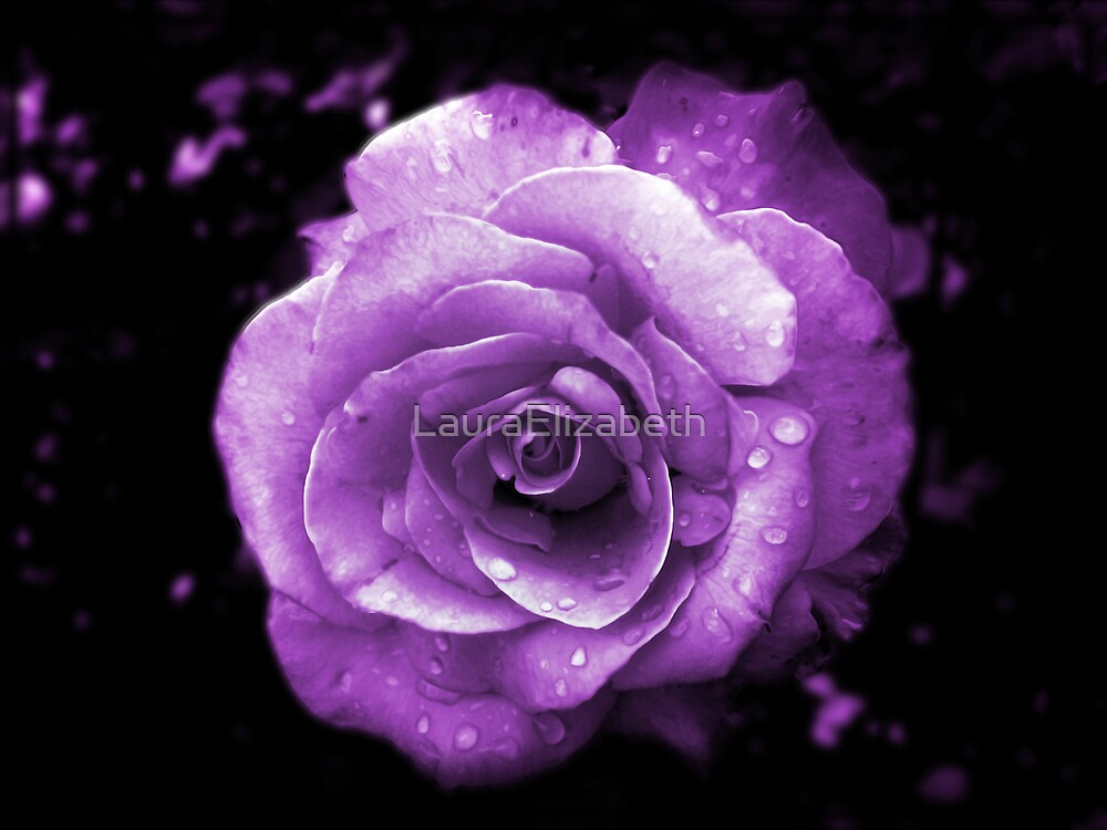 Purple Passion by LauraElizabeth