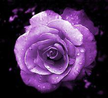Purple Passion by LauraElizabeth
