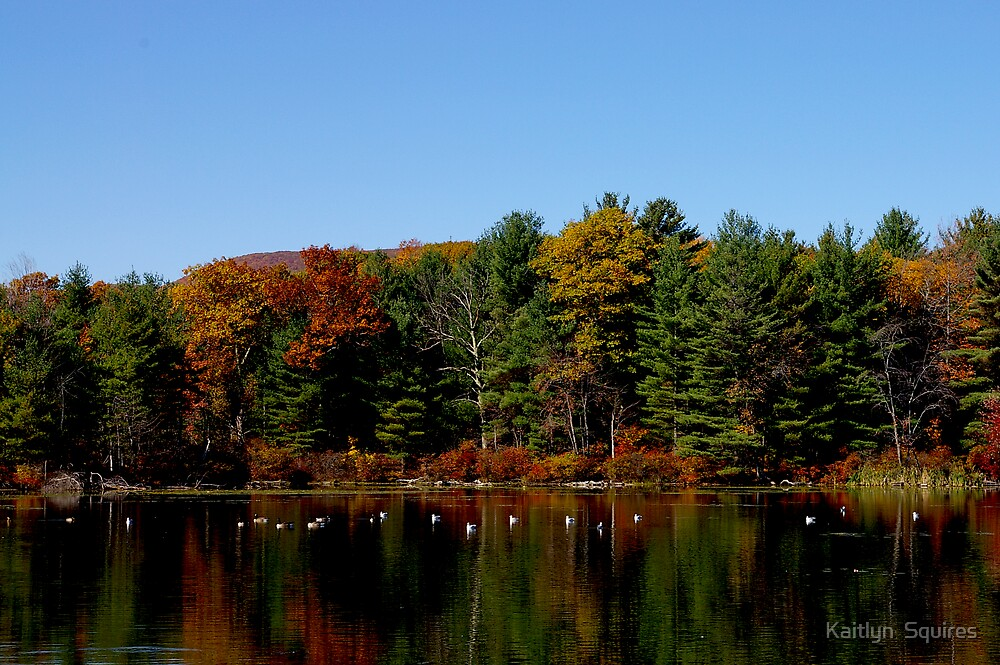 berkshire fall by Kaitlyn  Squires
