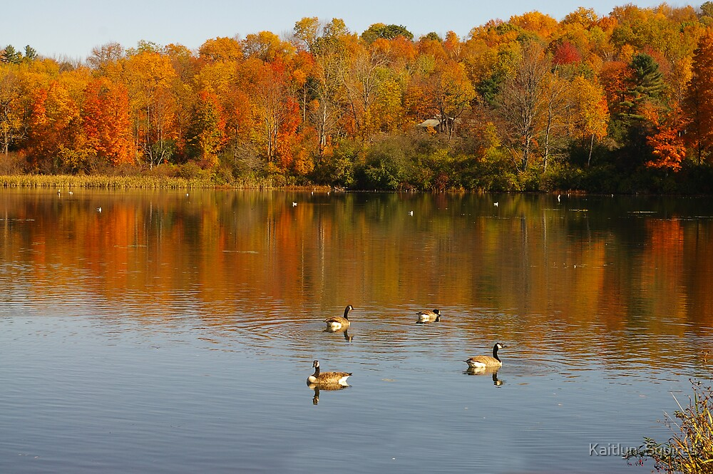 Flocks of color by Kaitlyn  Squires