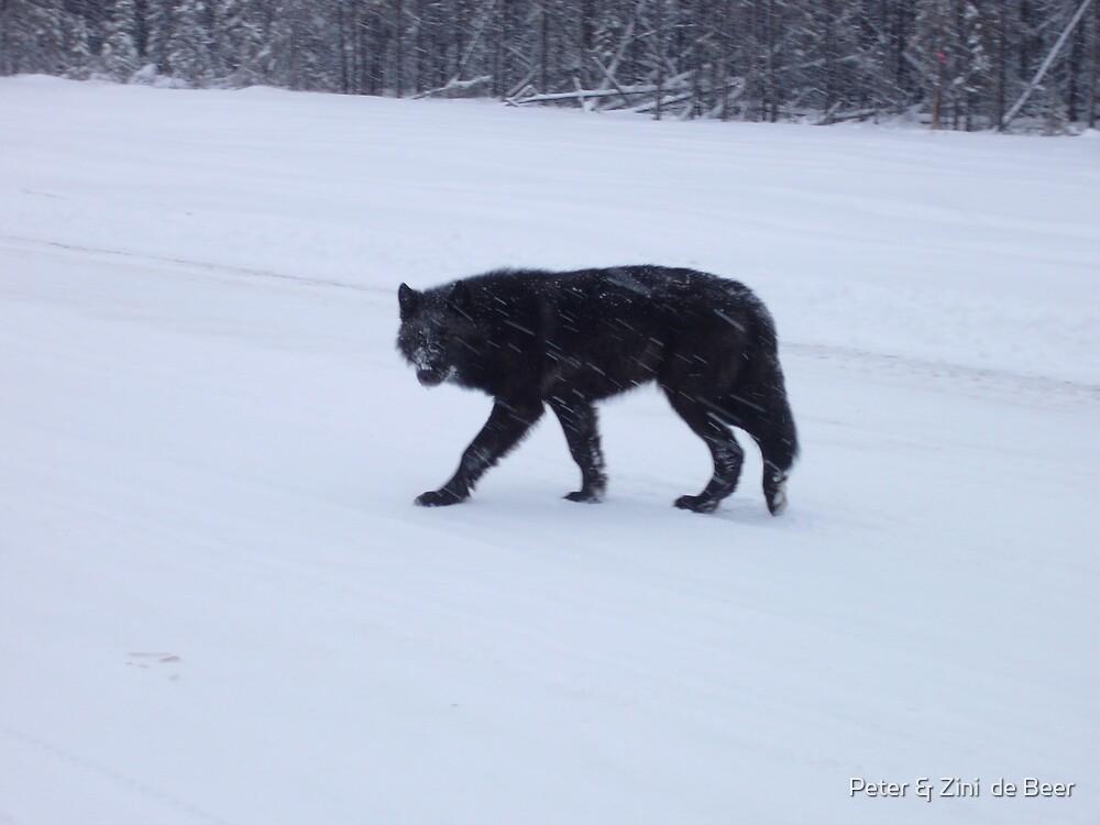 Walking in the Snow by Peter & Zini  de Beer