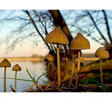 Another world - mushrooms at lake Photographic Print