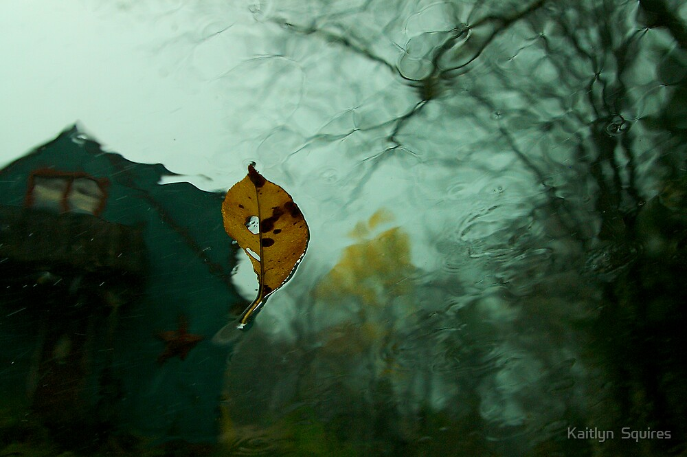 Last of fall by Kaitlyn  Squires