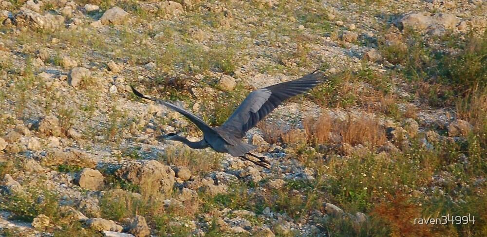 Big Blue Bird by raven34994