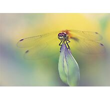 Irresistible Dragonfly Photographic Print