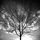 Lone Tree by RKastl