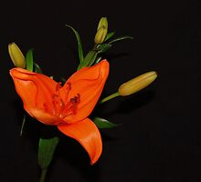 Beauty by DEBBIE OHMAN