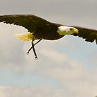 Bald Eagle by Mark Baldwyn