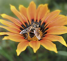 Bee on flower by Shelley Barnard