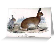 Woodland Rabbit Greeting Card