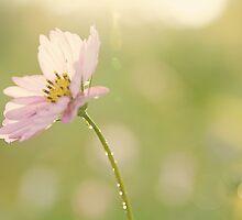 Nature's Perfection by BlueEyedBrooke