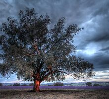 Lone Tree at Sunset by smylie