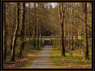 Coole Park by Patrick Ronan