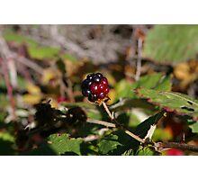 Blackberry Bubble Photographic Print