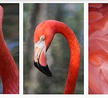 Flamingo Triptych by BethBernier