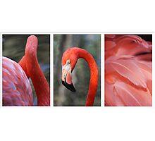 Flamingo Triptych Photographic Print