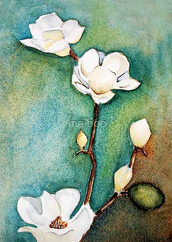 Oh magnolias by maiboo