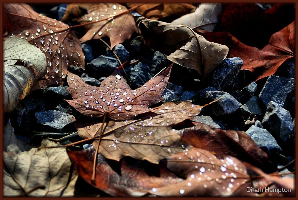 Shades of brown by Dinah Hampton