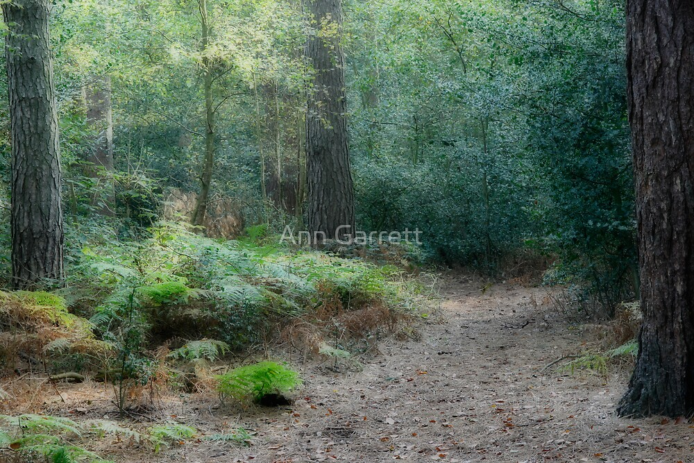 Forest Path by Ann Garrett