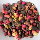 Pink pistachios by Maggie Hegarty
