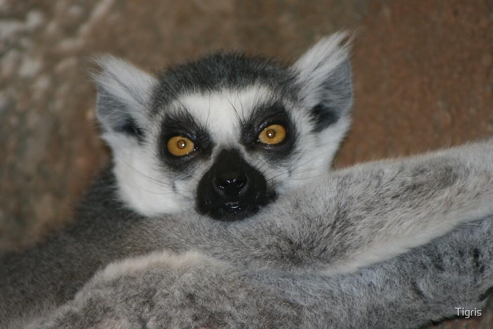 Madagascar! by Tigris
