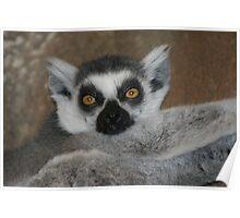 Madagascar! Poster