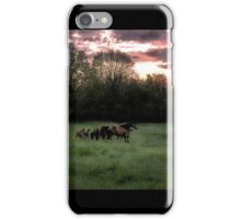 Broodmares at Dawn iPhone Case/Skin