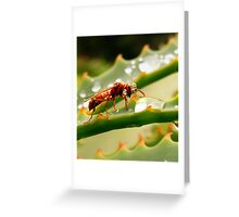 Hornet drinking from a rain drop (Polistes fastidiotus) Greeting Card