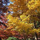 Colors of Fall by Vivian Sturdivant