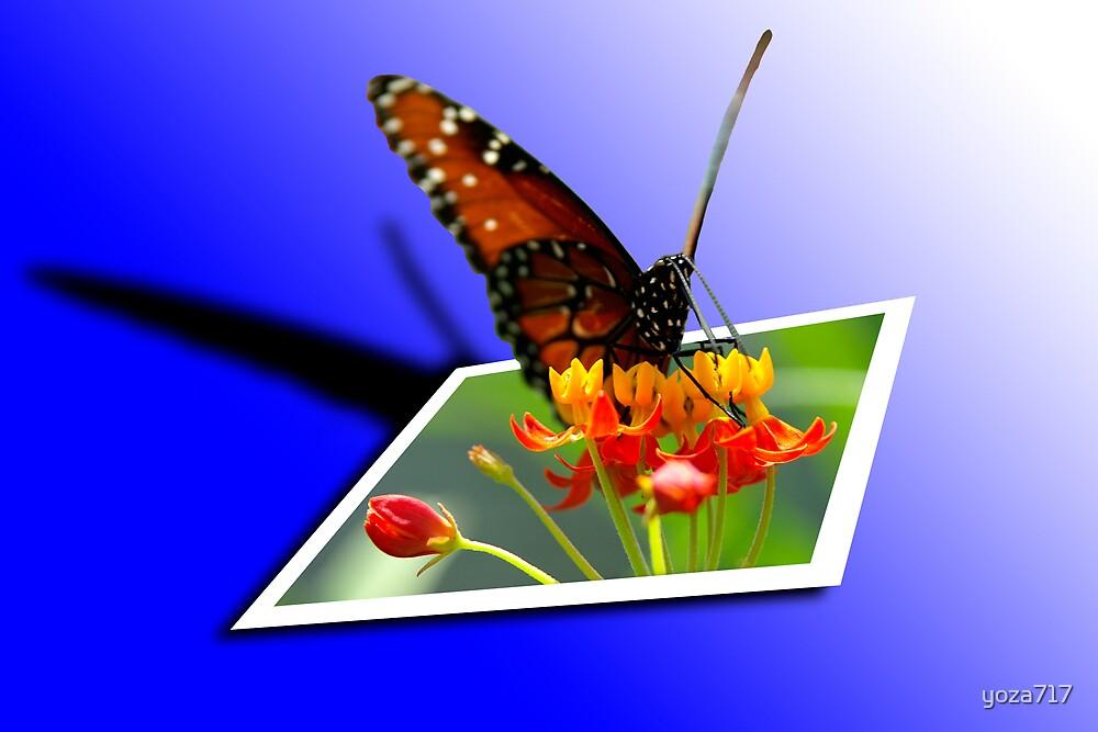 OOB Butterfly by yoza717