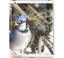 Blue Jay Winter Feast iPad Case/Skin