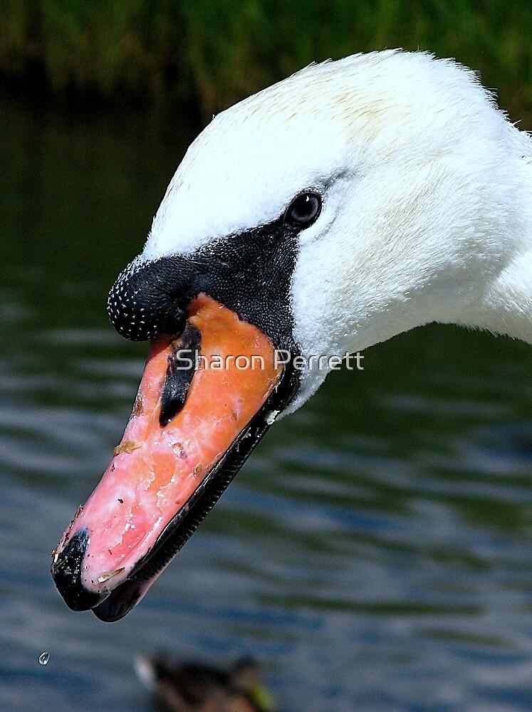 The Swan by Sharon Perrett
