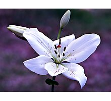 Lily Photographic Print