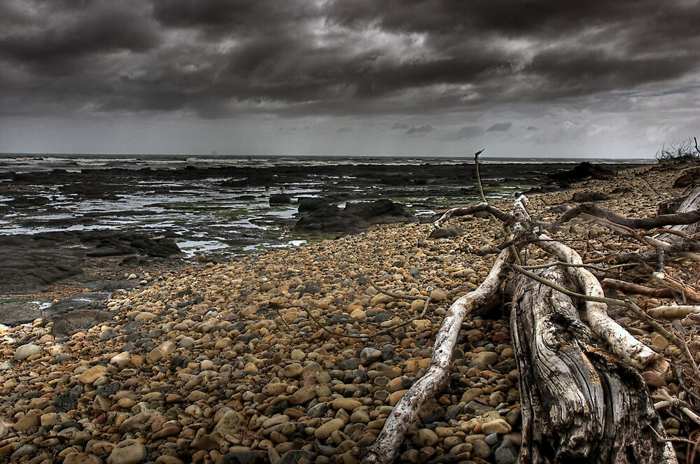 Driftwood by Tone