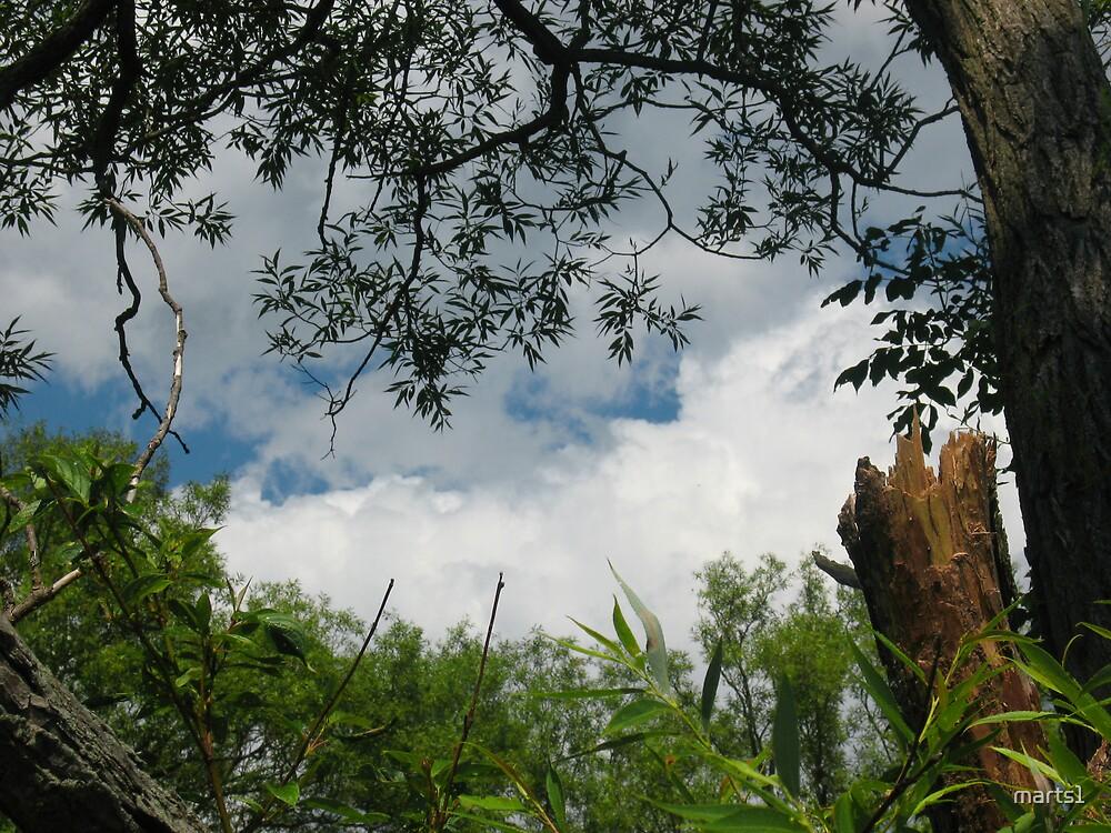 A peek upwards by marts1