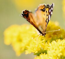 Savoring Summer by BlueEyedBrooke