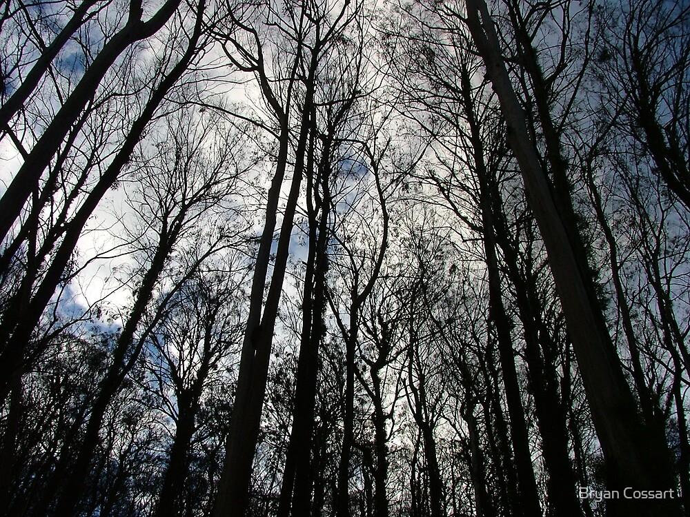 Burnt Brindabella Forest by Bryan Cossart