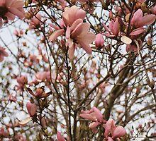 Springtime Flowers by Laura Howard