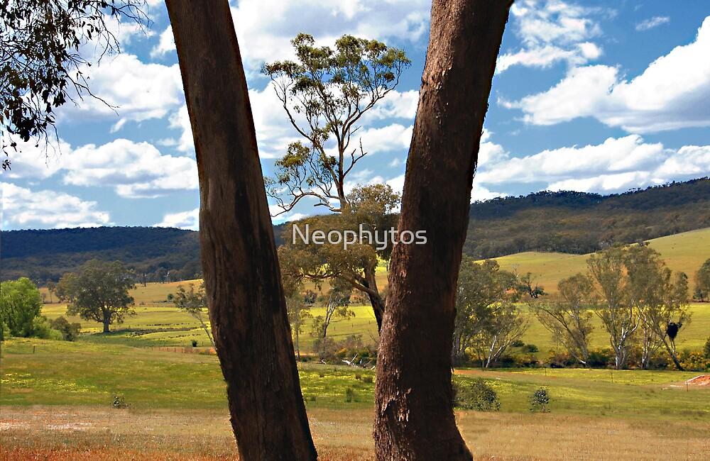 Gum tree frame 1 by Neophytos