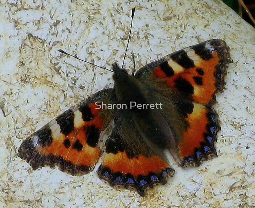 Small Tortoiseshell Butterfly by Sharon Perrett