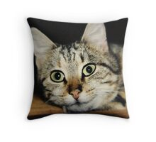Bright Eyed Kitten Throw Pillow