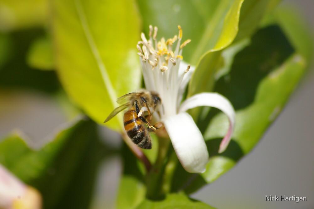Busy Bee by Nick Hartigan