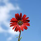 Daisy in the sky by Neophytos