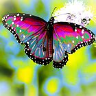 Butterfly by AspenWillow