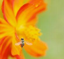 Sweet Little Bee by BlueEyedBrooke